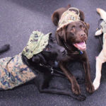 Service Dog Program Offers Critical Support