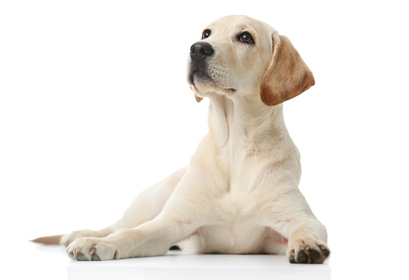 Pets Offer Many Benefits for People With Health Issues